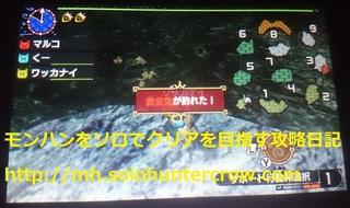 黄金魚 (2).JPG